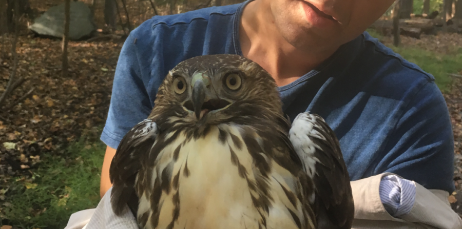 Train saves a sick hawk at the Closter Nature Center